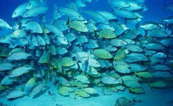 D'après le rapport de la direction régionale de la pêche à Mahdia