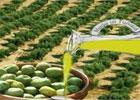 Six entreprises tunisiennes ont obtenu le prix du 2e concours national de la meilleure huile d'olive conditionnée pour la saison oléicole 2011-2012. Les catégories concernées sont l'huile d'olive vierge extra avec fruité ...