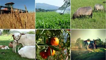 Un atelier de restitution et de mise en œuvre des résultats d'une étude sur « Le financement agricole en Tunisie » a été organisé