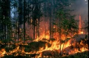 Nabeul : Plus de 100 hectares de forêt ravagés par le feu Incendie-1.jpg?zoom=2