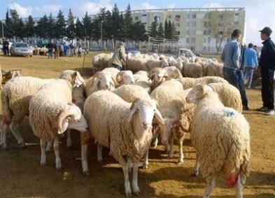 Le mouton de l'Aïd ne passionne plus les foules… Mosddf.jpg?zoom=2