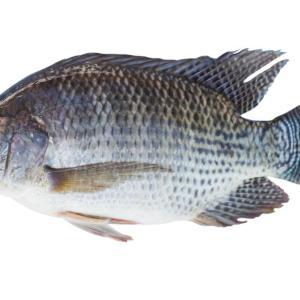 Fresh Tilapia Fish 1kg
