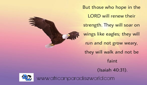 wait upon the lord and fly like eagle