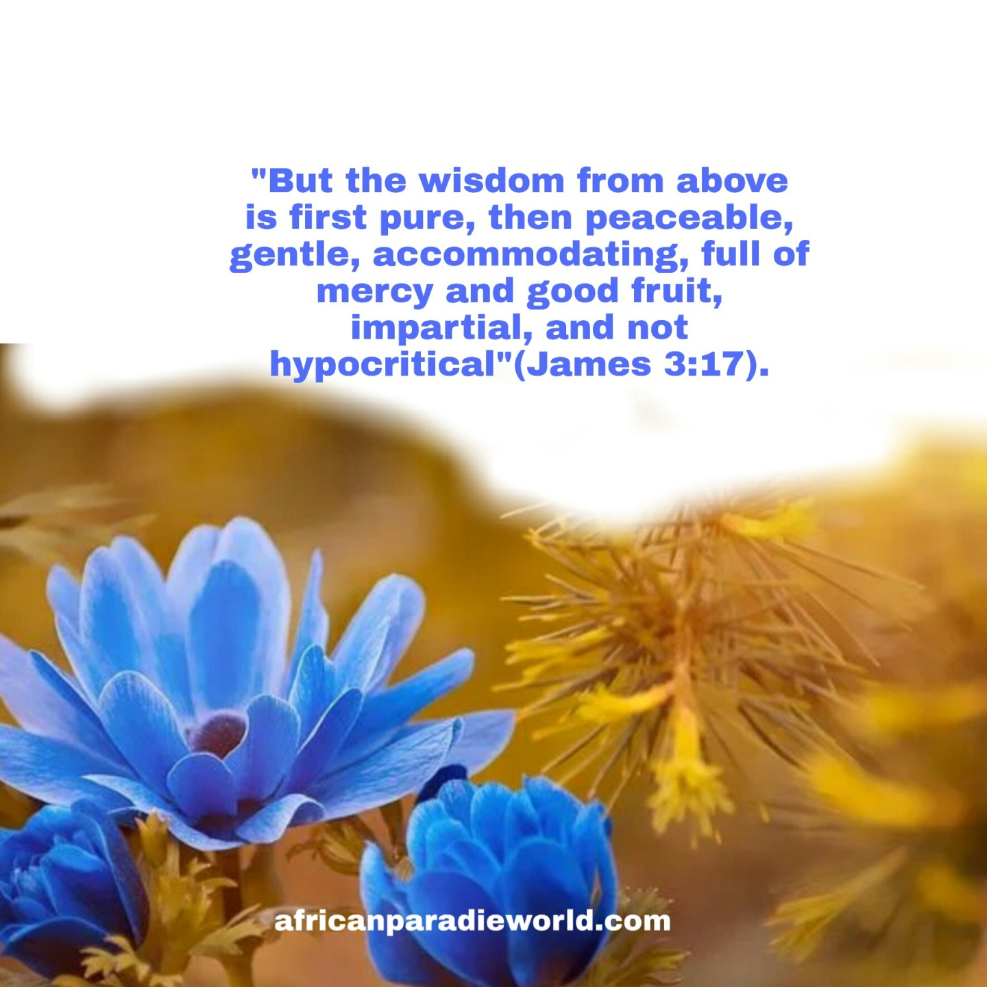 Wisdom from above Bible verse