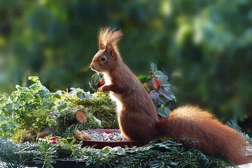 beautiful things in nature