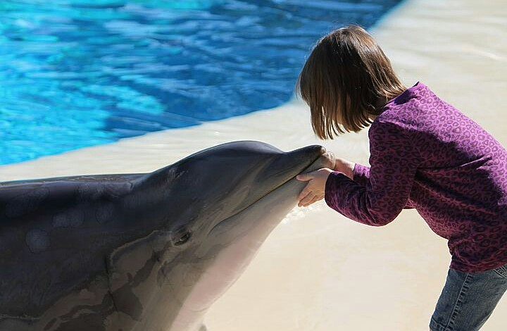 A kid having a touch of a young dolphin.