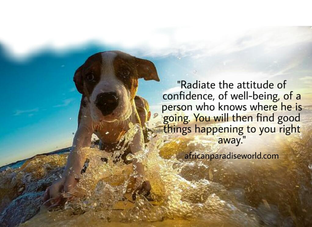 attitude of a self confident person in life