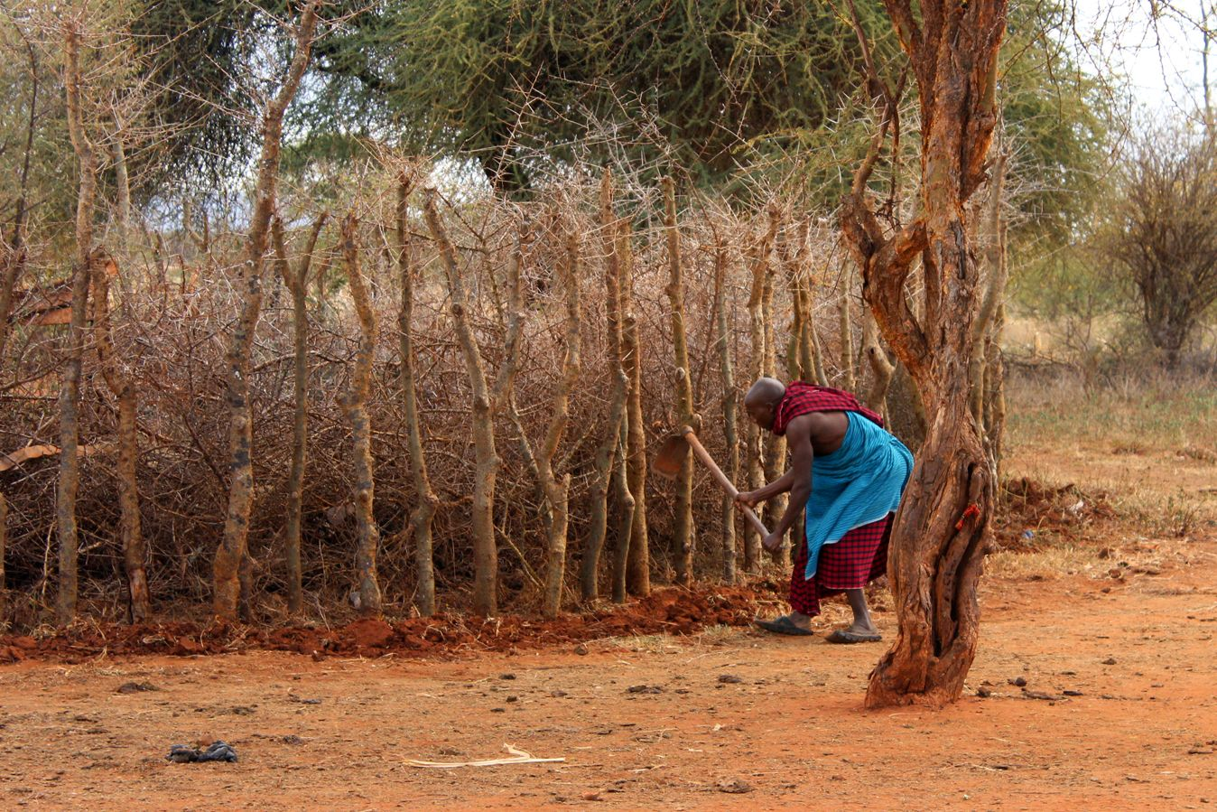 A furrow is dug around a circle of trees during the construction of a Living Wall.