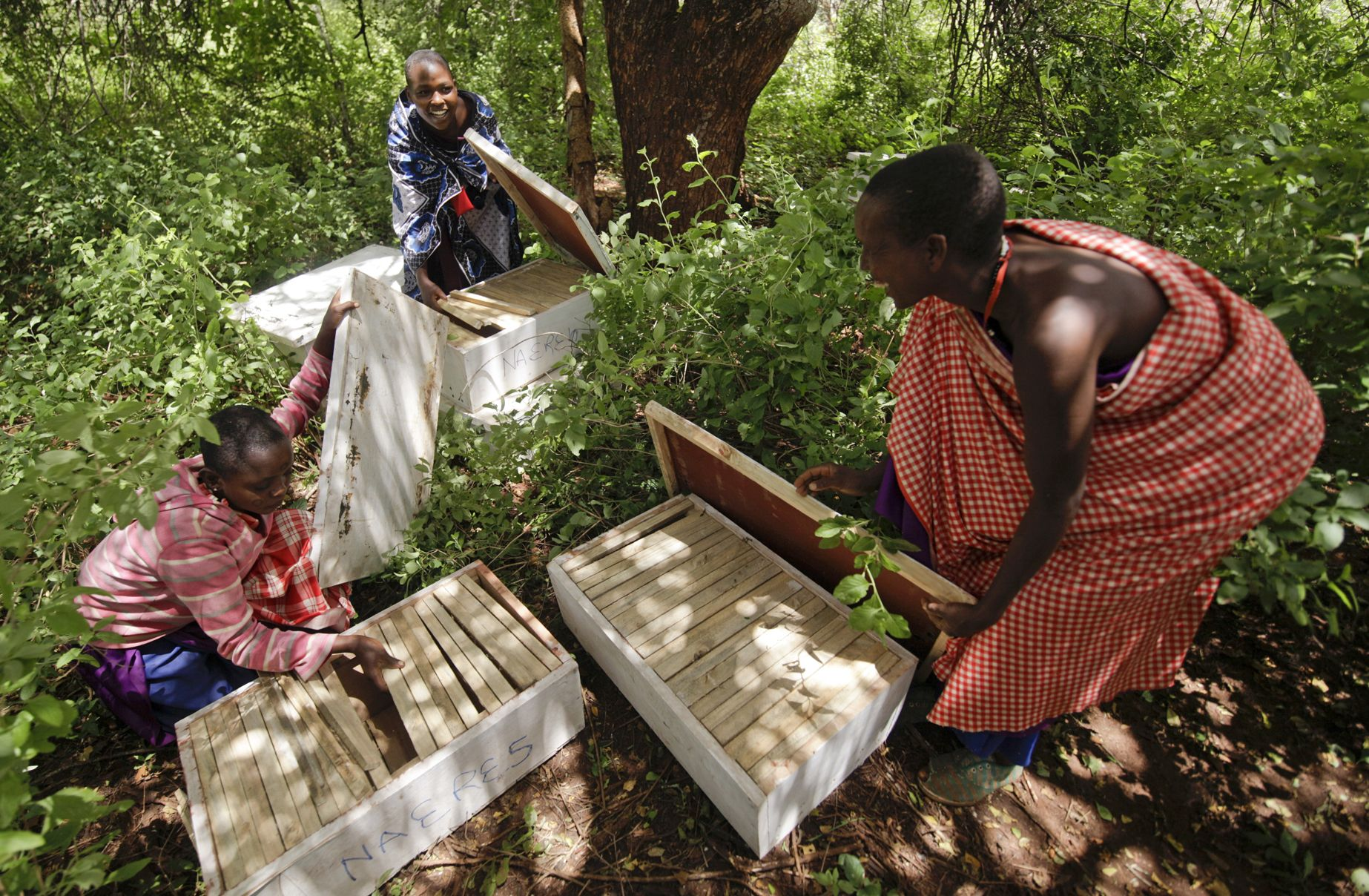 Maasai women in APW's Women's Beekeeping Initiative prepare to hang hives.