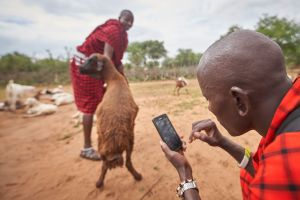 Maasai warrior photographs injured livestock
