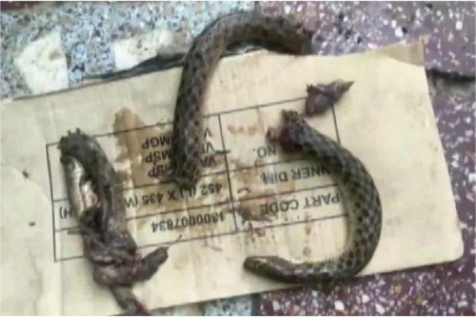 Snake bites man, man bites snake, man ends up in hospital