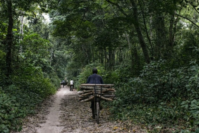 Gabon becomes first African nation paid to fight deforestation