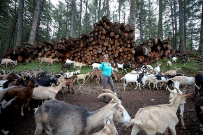 Ethiopian migrant killed on her goat farm in Italy