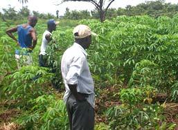 SL-08-Yankansa-Cassava-Plan