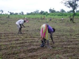 Planting-at-FHDO-Farmland-a