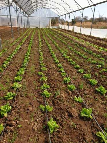 BWA -- Kabwata Agriculture Greenhouse