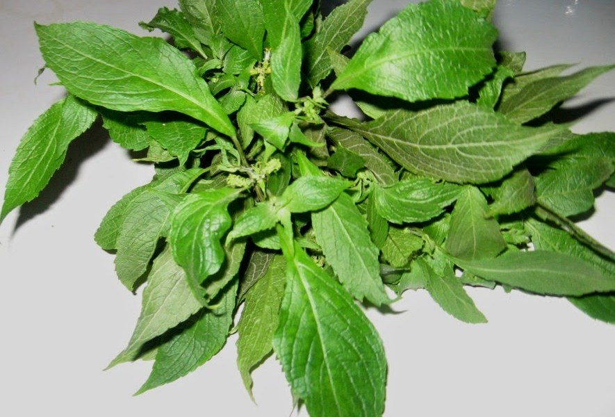 health-benefits-of-scent-leaves