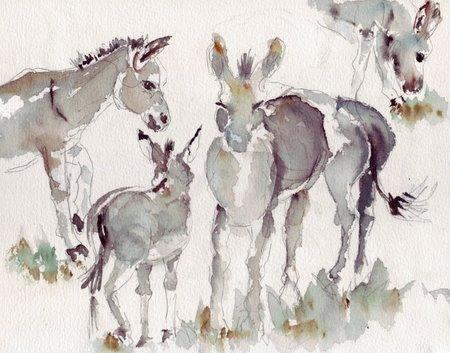 donkeys.jpg
