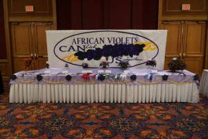 Single long table with the winning exhbits in the 2018 AVSA Convention in Buffalo NY