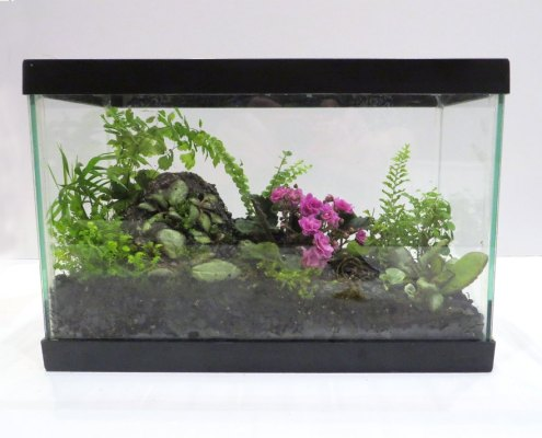 Glass terrarium filled with a pink violet and a mixture of green plants