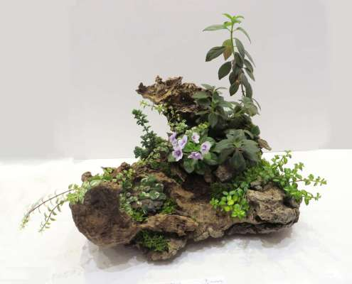 Natural garden with chunk of weathered wood planted with various creeping and vining plants and one blooming African violet