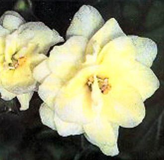 1992 yellow