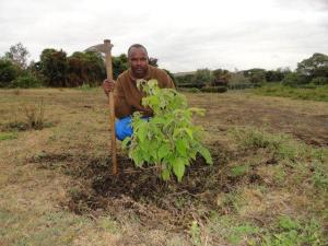 Dierick tree after safari 2014