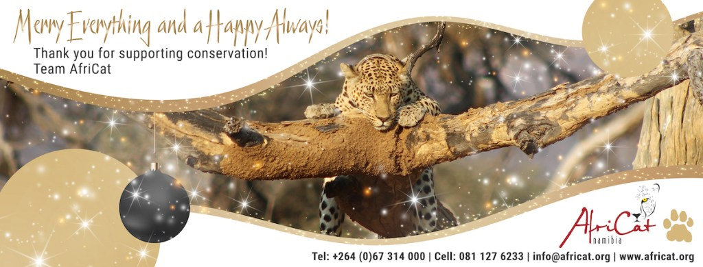 AfriCat seasons greetings 2020