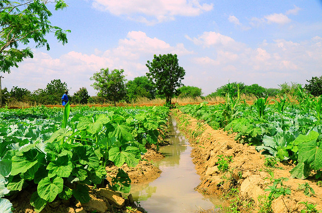 Image result for agricultural transformation in africa