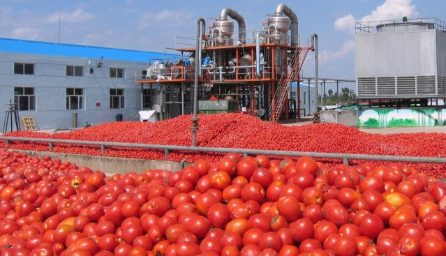 Dangote Tomato factory set to reopen february