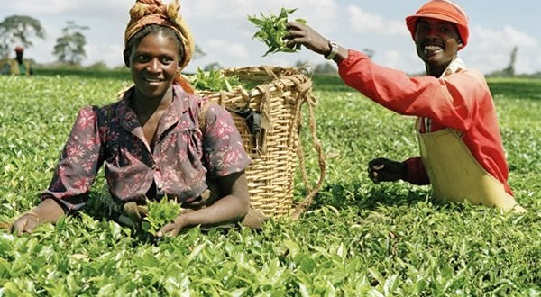 New employment policy in the Agricultural sector forthcoming