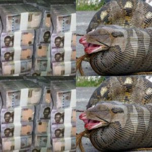 Mysterious snake swallows N36 million cash in Jamb office's vault