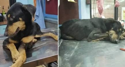Dog dies from injuries sustained after being gang raped by four men