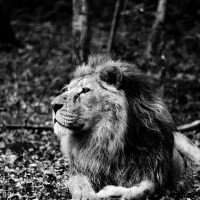 De l'idée du pouvoir dans les sociétés africaines