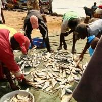 Economie: Les produits halieutiques des pays de l'Afrique centrale certifiés à l'exportation vers l´Europe