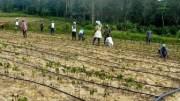 Agriculture foncier