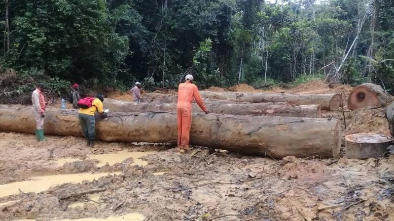 Le Kévazingo mis en réserve au Gabon