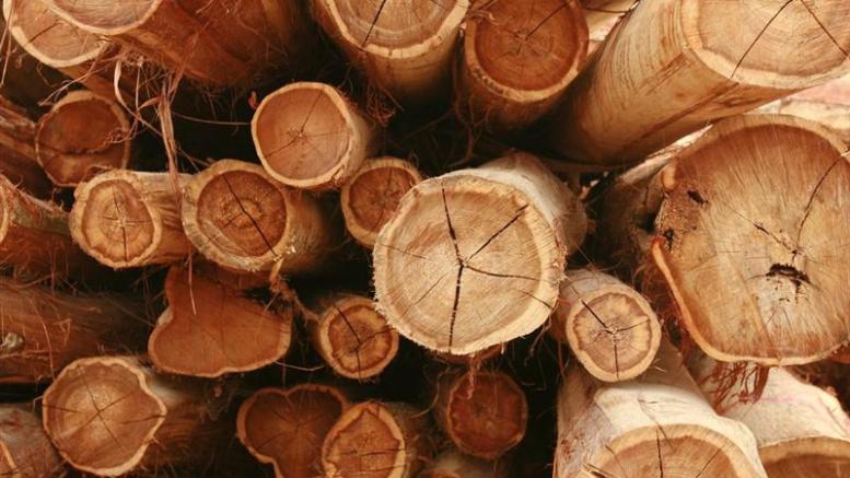 Le bois