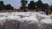 Burkina fasso coton