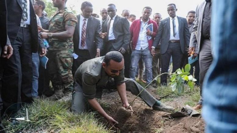 Image result for Ethiopie..Arbre 200 millions en un jour..Abiy