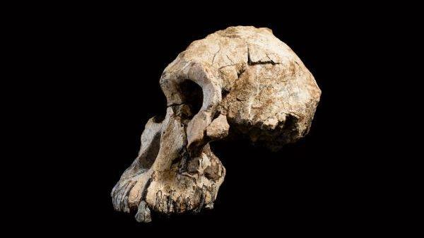 Ethiopie: découverte d'un crâne vieux de 3,8 millions d'années