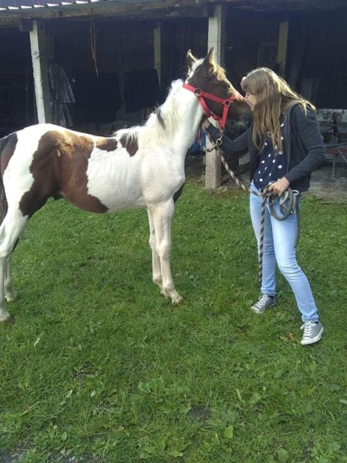 Bizarre: Yentl (23) sees her own foal for sale for 1,000 euros