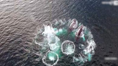 bubbles of whales