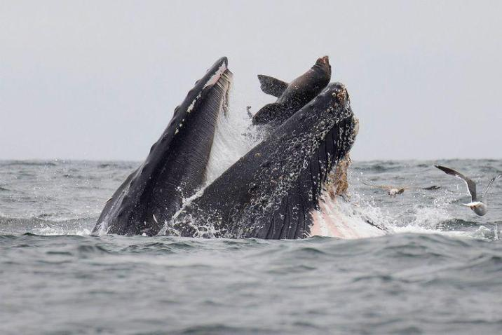 """Photographer witnessing unlikely thriller at sea: """"once in your life"""""""