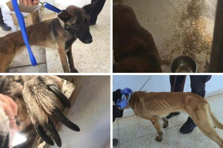 US no longer lends sniffer dogs to Egypt and Jordan