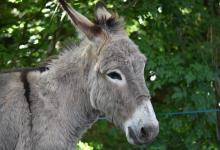 What to know why Kenya ban slaughtering of Donkeys