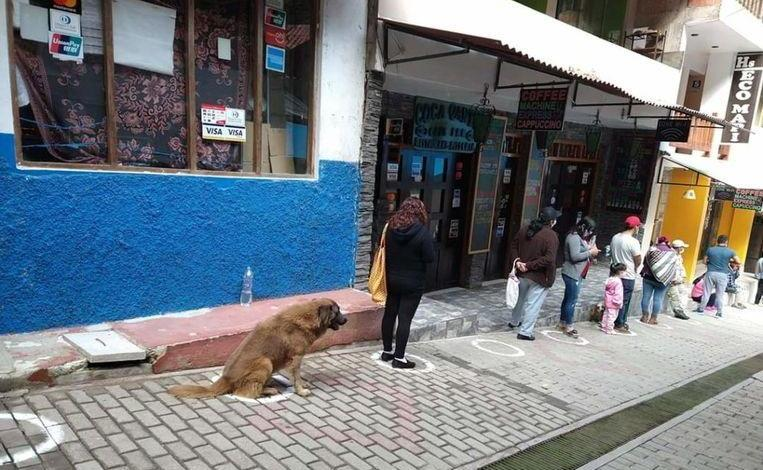 Dog waits in line in front of the supermarket on behalf of his owner