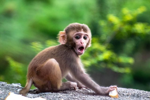 Monkey swallows N70 million