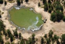 Mystery Solved: Blue-green-algae caused massive elephant deaths in Botswana