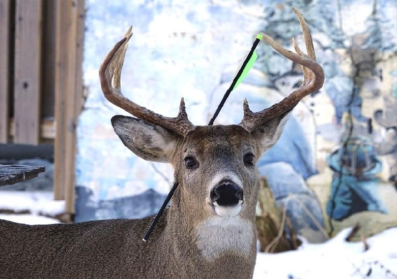 With an arrow on its head, Carrot visited a wildlife photographer